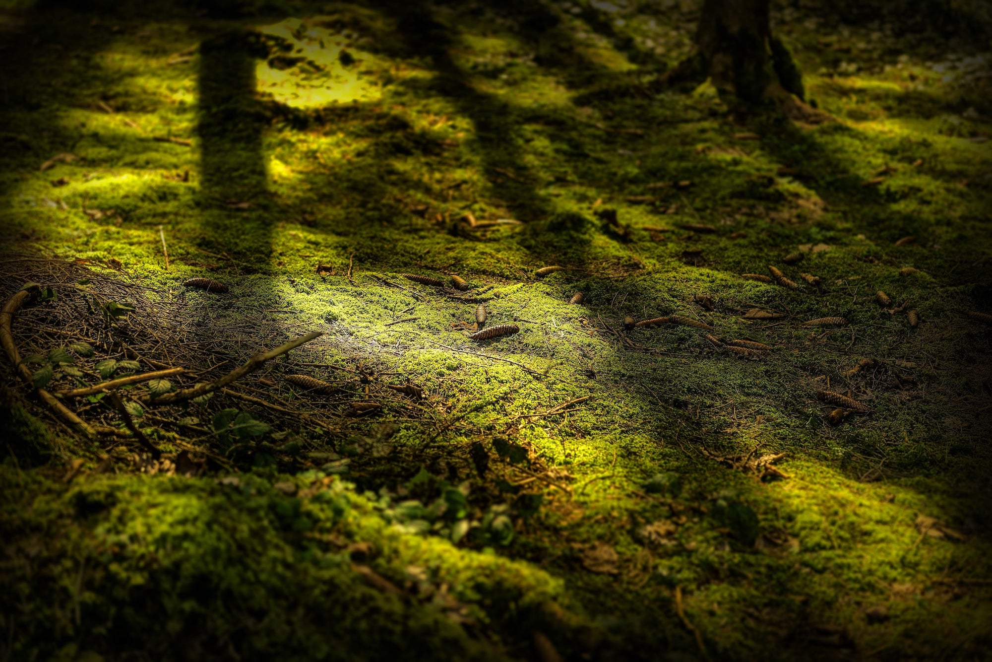 close-shot-mossy-ground-with-pine-cones-daytime-min